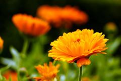 Flowers 🌷