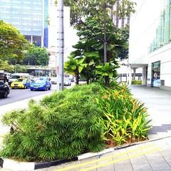 綠色廊道實景(圖片攝影:蔡宗翰)