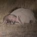 Aardvark (John Davies)