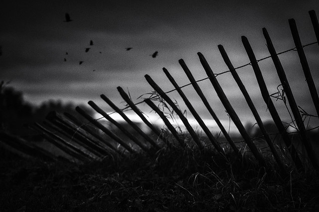 Last Light Beyond the Fence