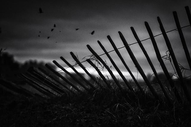 Last Light Beyond the Fence