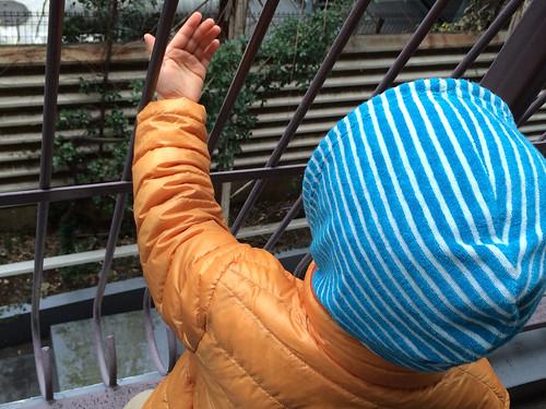 雪を捕まえたいとらちゃん 2015/1/1