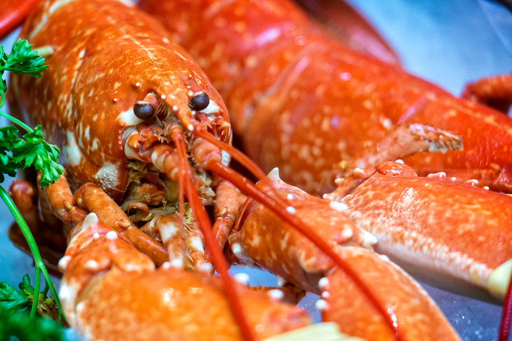 lobster cooked, moist heat, crustaceans, northern