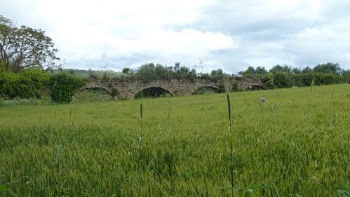 Viadukt (4466)