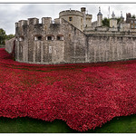 Tower_poppies_pana1-v2