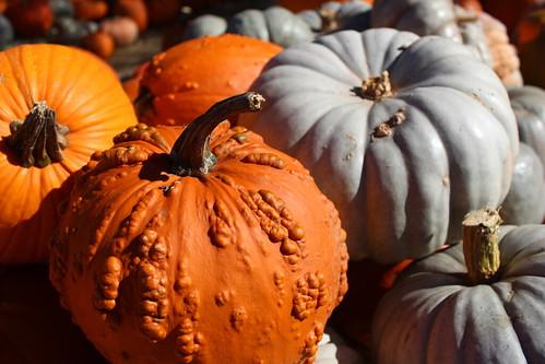 PumpkinFun2014-24