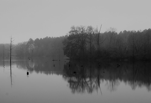 Morning on the Alabama River