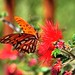 Tucson Butterfly