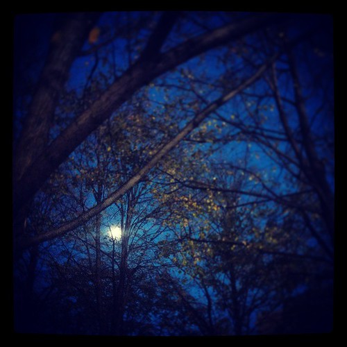 A big, bright moon could be seen through the trees...