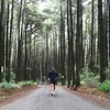 Run with pine. #rhyme #run #trailrun #mountain #nature #liveauthentic #livefolk #westjava #instagood #vscocam