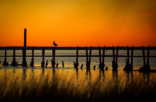 winter sunset sky orange usa seascape color beach nature beautiful beauty birds silhouette photography solitude florida dusk wildlife birding pelican epic goldenhour gulfcoast 70200mmf28 sonyalpha stmarkswildliferefuge sonyslta99 kimmienflorida