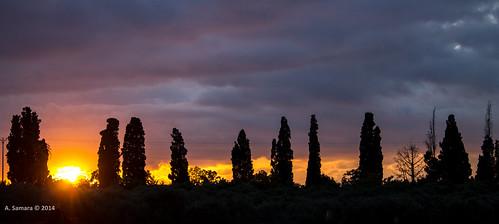 travel sunset sky sun tree clouds israel middleeast romance redlight aladin samara tira