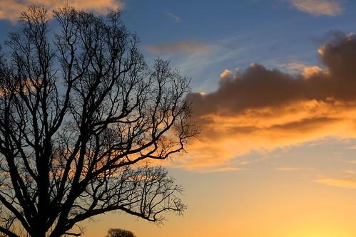winter sky cloud tree