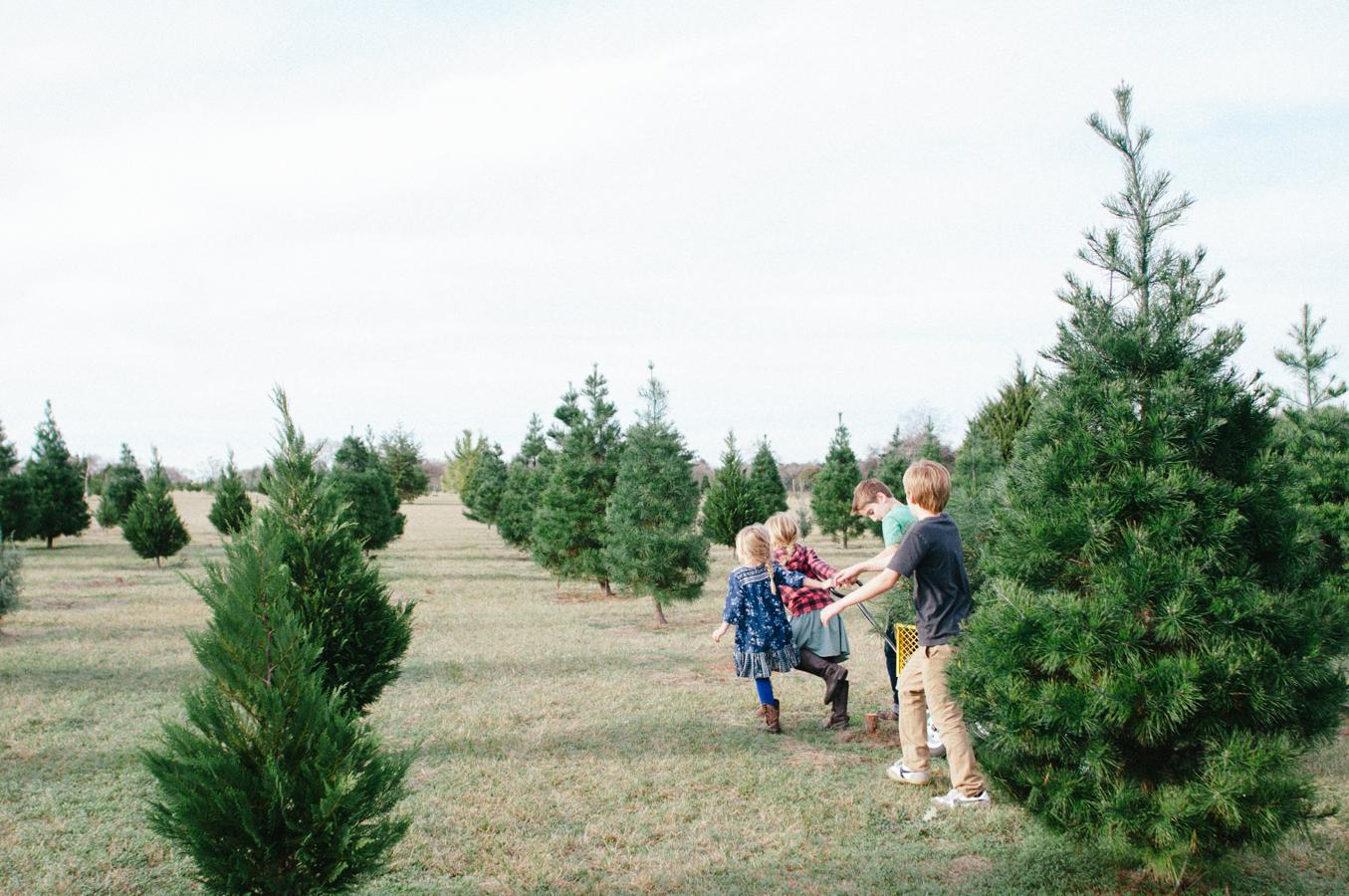 christmas_tree-5