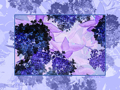 Violet/Purple