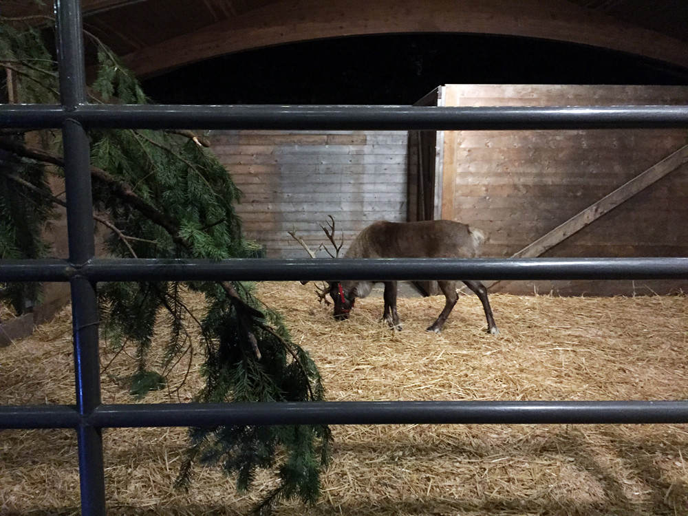 Woodland Park Zoo_reindeer