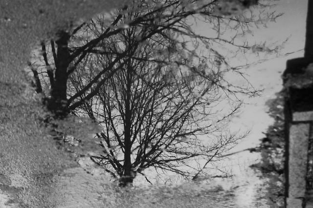 Tree below