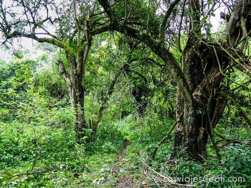 bosques primarios en los lagos de etiopia