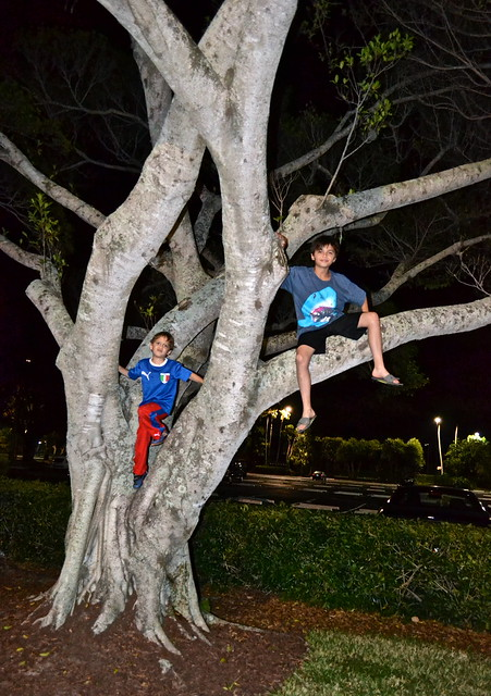 PGA National Resort and Spa - climbing trees