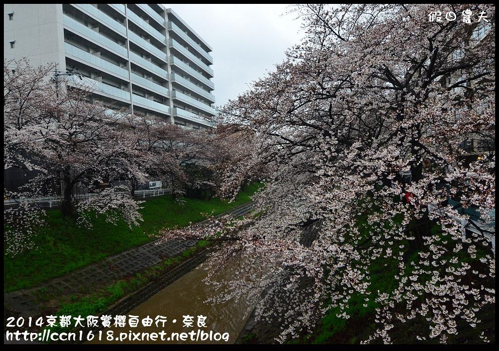 2014京都大阪賞櫻自由行.奈良DSC_0797