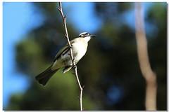 各種鳥類與家禽類 - a
