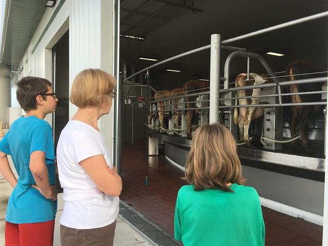 Cow Carousel