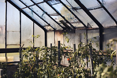 Green house - Photo of Champdivers