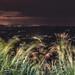 City Lights by medrano_deckonjan