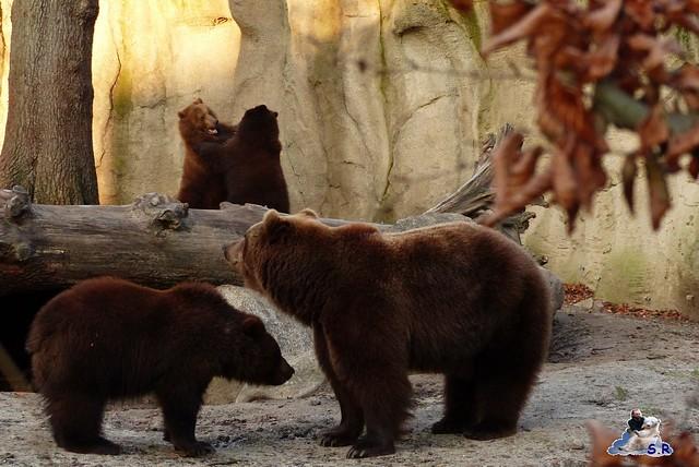 Tierpark Hagenbeck 115
