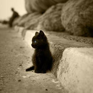 cat-alone-street
