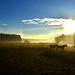 Zwei Pferde im Morgennebel by matze_ott