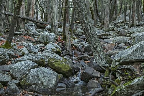 life trees winter water moss trails waterfalls streams yosemitenationalpark yosemitevalley mountainranges canonphotography californialandscapes