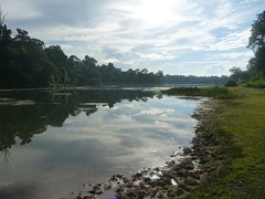 MacRitchie Reservoir - 118