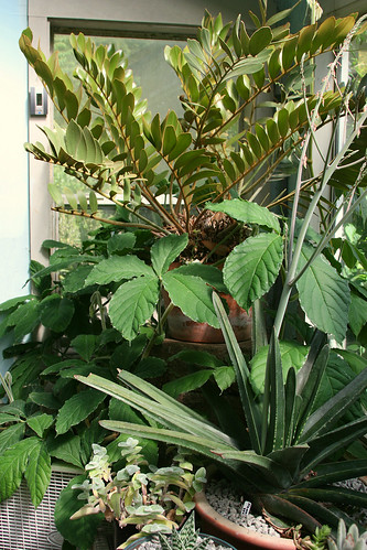 14_greenhouse_foliage