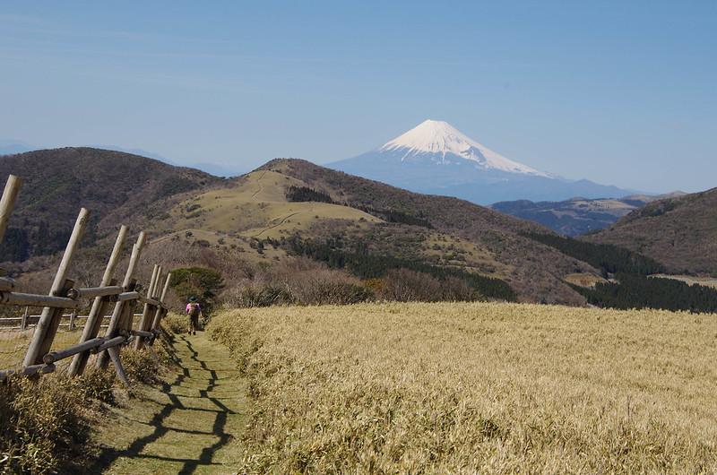 2014-03-31_00578_伊豆稜線トレイル.jpg
