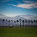 Coachilla Valley by SBurrage