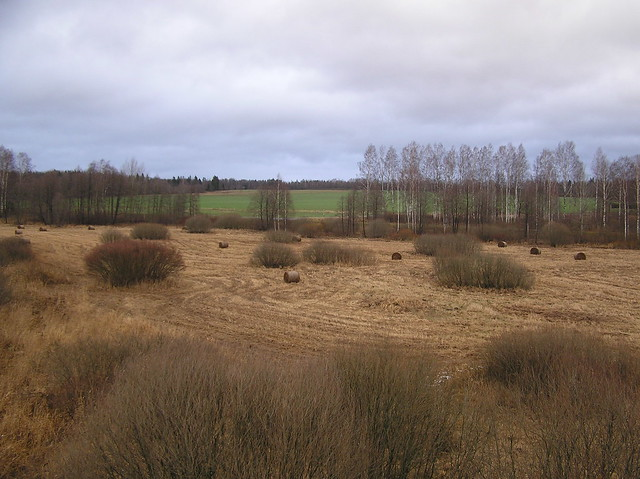Õisu meadow