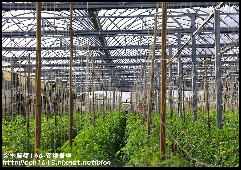 金水農情164-安梅農場_DSC8348
