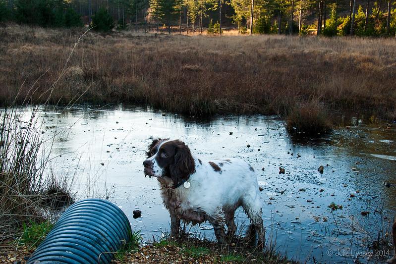 The pond is still frozen