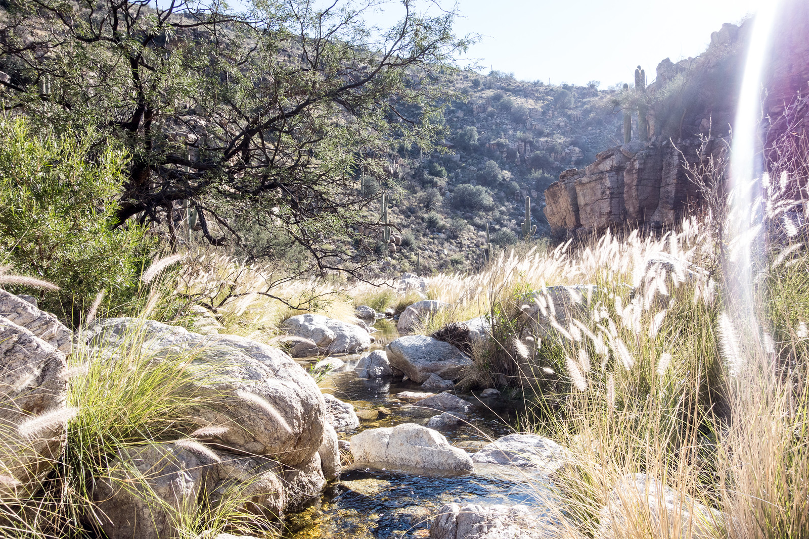 1501 Grass in La Milagrosa Canyon