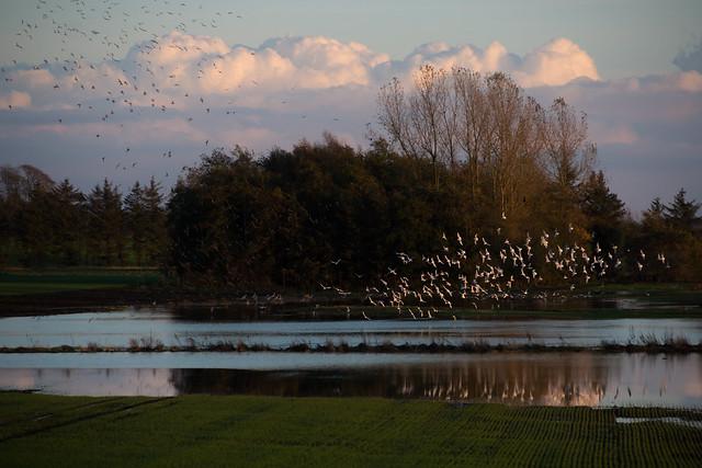 Birds - Near Aarhus