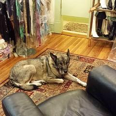 I love a shop dog