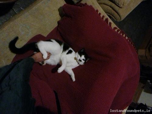 Fri, Dec 19th, 2014 Lost Male Cat - Corrandulla, Galway