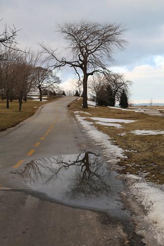 Tree, Reflected