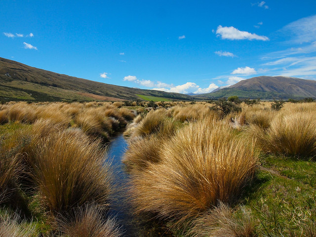 Lots of tussock