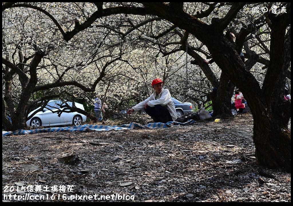 2015信義土場梅花DSC_9413