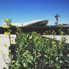 This morning's adventure: @jetblue's farm garden at Terminal Five.