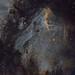 IC5070 Pelican Nebula SHO