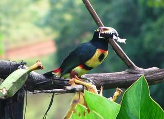 Costa Rica 2006 - 481a