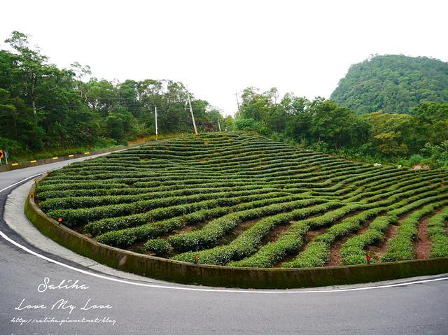 新北石碇景點千島湖八卦茶園 (1)